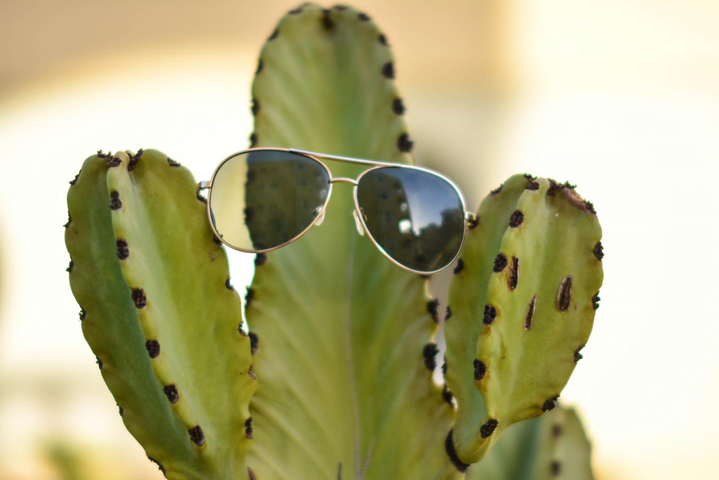 Forever 21 sunglasses on cactus
